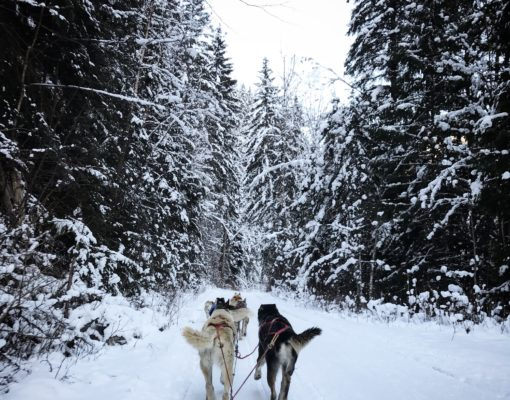 5 memorable winter adventures in Jasper National Park